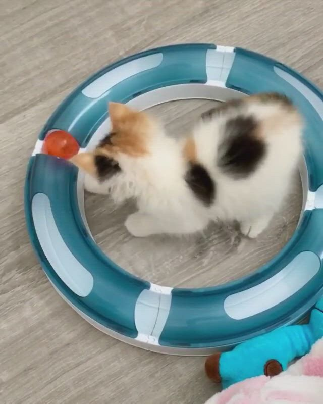 Her markings are so beautiful! - Video & GIFs | cats,feline,funny puns,toy boxes,therapy,kitty,in this moment,dogs,cute,animals,cute dogs