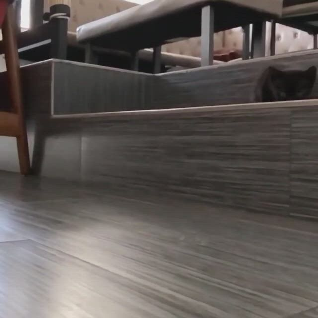 Mini panther is coming - Video & GIFs | all about kitties,cats and kittens,hardwood floors,funny stuff,kitty,happy,dogs,cute,animals,outfit