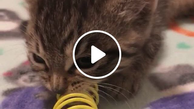So Ferocious - Video & GIFs   all about kitties, cute baby animals, funny animals, cat memorial, cat stuff, cat gif, cool cats, scooby doo, cute babies, dog cat