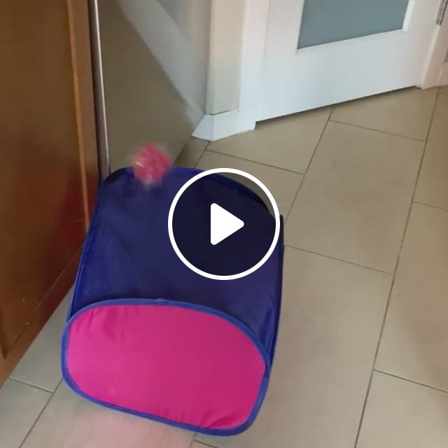 Wait For It LOL - Video & GIFs | all about cats, crazy cat lady, crazy cats, animals and pets, funny animals, cat and dog videos, funny animal videos, my children, in this world