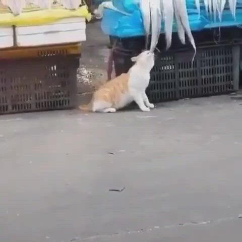 Cat is stealing a fish