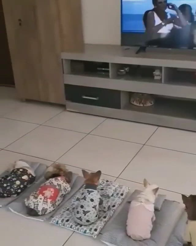 Cute puppies are watching