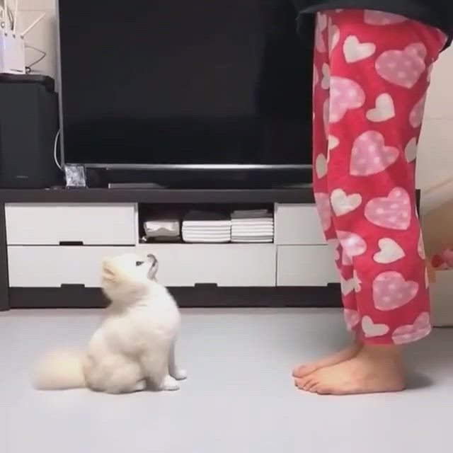 Cute puppies dancing - Video & GIFs | cute dog memes,funny animal memes,funny animal ,cute funny animals,cute baby animals,funny dogs,cat and dog ,emotional support animal,cat dog