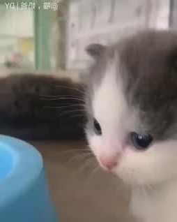 Cute innocent kitty