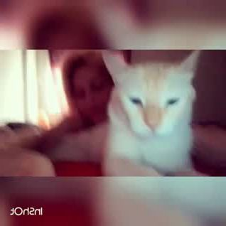 Cute kitten busy in shooting - Video & GIFs   kittens cutest,spotted animals,kitten,shooting video,bulldogs,kitty,puppies,adventure,pets,nature