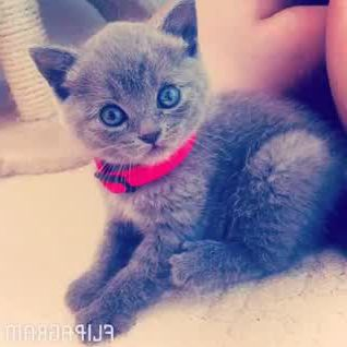 Cute kitty memorise