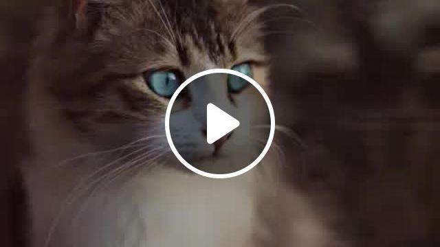 Question About Kitten - Video & GIFs   cats, kitten gif, kittens, puppies, dog, nature, animals, diy dog