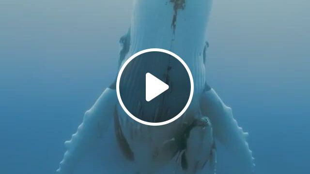 Mom And Her Baby - Video & GIFs | animals, cute baby animals, beautiful sea creatures, animals beautiful, cute funny animals, nature animals, animals and pets, wildlife nature, majestic animals, ocean creatures