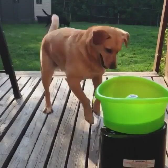 Tag someone to make their day - Video & GIFs | funny animal,funny,funny dogs,funny animals,cute animals,animals dog,cute kitten gif,kittens cutest,dog tennis ball launcher,pet shop,cute puppies