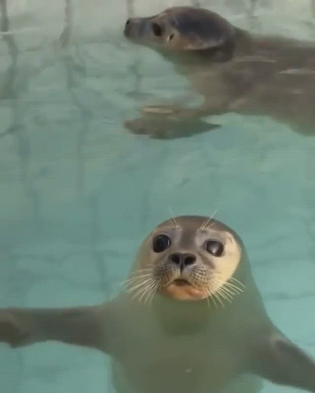 Big kiss - Video & GIFs   cute little animals,cute wild animals,cute baby animals,cute funny animals,happy animals,animals and pets,cute seals,really cute puppies,seal pup,funny animal