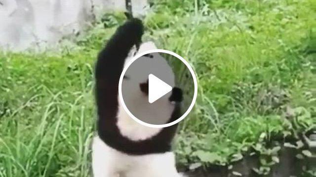 Climb - Video & GIFs | cute funny animals, panda funny, cute animals, panda love, cute panda, panda bear, cute little animals, animals planet, animals and pets, animals are beautiful people, interesting animals