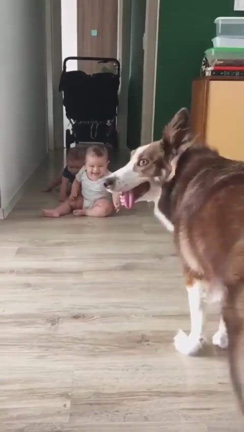 Kids love playing with dog