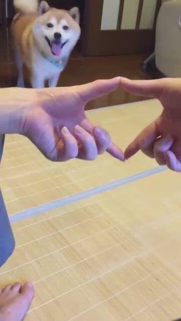 Adorable Pet Videos