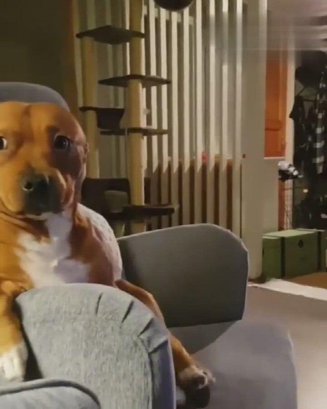 What a precious baby - Video & GIFs   cute animals,cute dogs,cute funny animals,cute puppies,dogs and puppies,doggies,pit bull,dog jokes,rottweiler puppies,cute animal videos