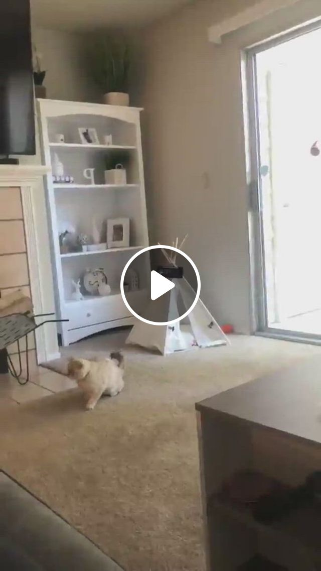 Funny Cat - Video & GIFs   funny animal , cat room, cat toys
