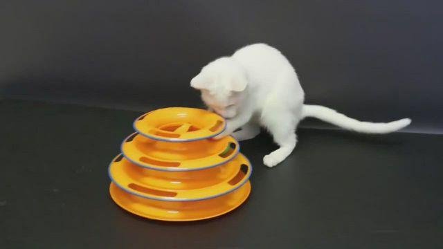 Pet Cat Intelligence Amusement Disc Ball Toy Training