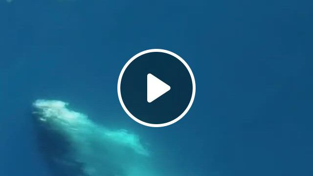 WATCH OUT DOLPHINS - Video & GIFs | funny animals, animals, animal gifs, nature videos, nature gif, cute animals, quran quotes inspirational, album bts, marine life, funny cute, dolphins