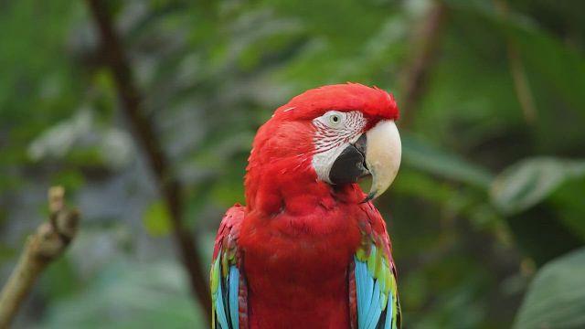 On rarest birds in parrot, animals, nature animals - Video & GIFs | parrot,animals,nature animals,nature gif,nature quotes,nature ,animal memes,funny animals,cute animals,nature activities,rare birds,nature illustration