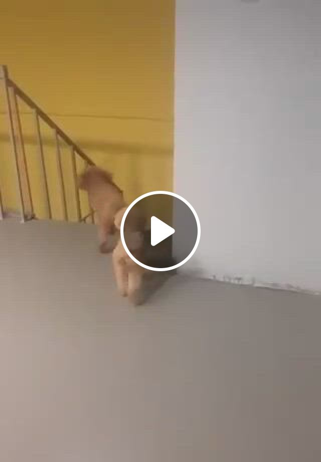 Check Out This Pup Doing A Prank - Video & GIFs | cute animals, cute baby animals, baby animals funny, animal jokes, funny animal memes, cute funny animals, funny cute, funny dogs, hilarious sayings, cute puppies, cute dogs