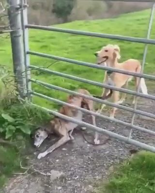 You call that a gate - Video & GIFs   cute dogs,cute funny animals,puppies,funny animal ,cute baby animals,funny dogs,animals and pets,animal jokes,funny images