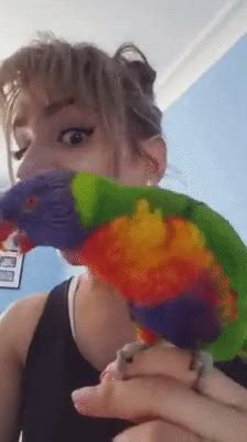 Funny Rainbow lorikeet with his owner - Video & GIFs   funny parrots,funny animal videos,funny animals,funny birds,cute birds,cute funny animals,funny cute,funny short videos,parrot pet