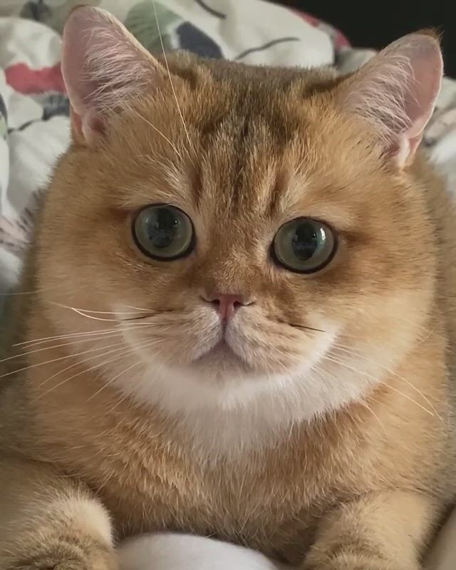 I can be cute too. See, is my cute face. - Video & GIFs   cute cats,baby cats,cute baby bunnies,kittens cutest,cute baby animals,cats and kittens,ragdoll kittens,funny kittens,bengal cats,kitty cats