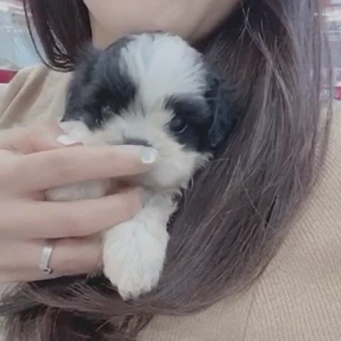 Lowell puppy family maltipoo puppies - Video & GIFs | cute baby dogs,puppies,maltipoo puppy,maltipoo puppies for sale,toy poodle puppies,teacup puppies,dachshund puppies,cute puppies,doggies,pet dogs,dog cat,pets