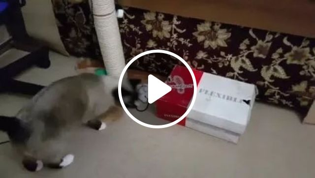 The Best Places to Play Hide and Seek, animals, cute cat, box, game, Hide and Seek