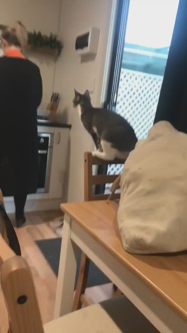 Cat jumped on the shoulder