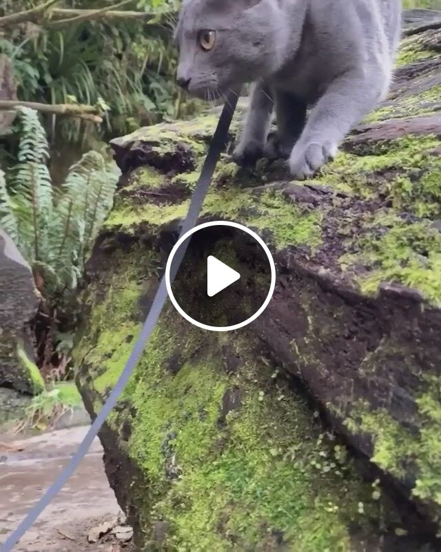 Catventures Around The Catlins - Video & GIFs | all about cats, kittens cutest, cute cats, funny animals, cute animals, flightless bird, foster kittens, gif of the day, cat boarding