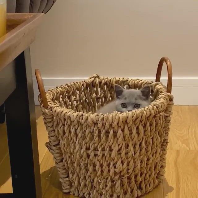 Cute cat basket