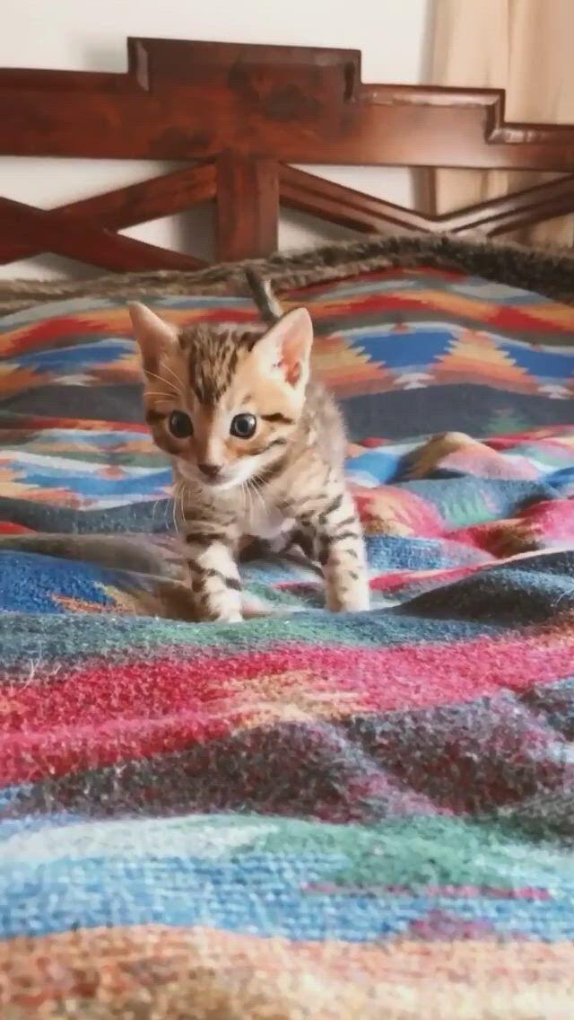 Cute Cat first steps Enjoy