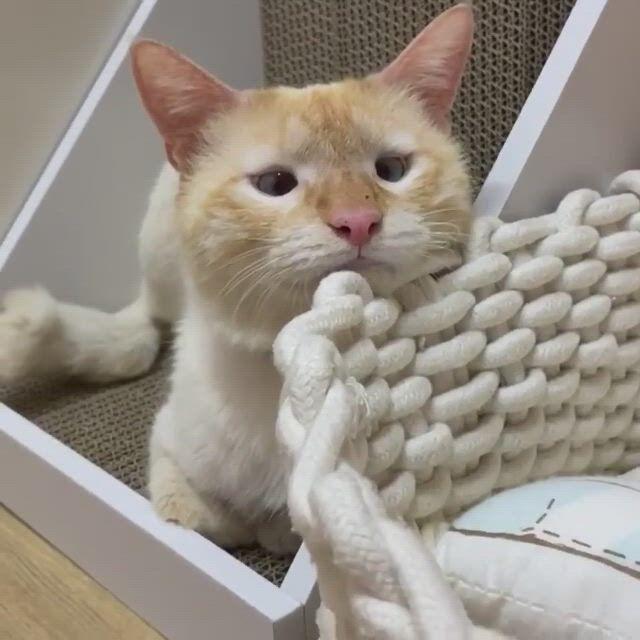 Cute cat little effortless meow