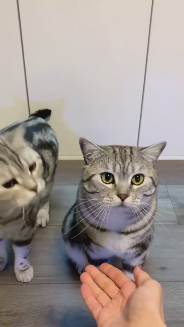 Cute cat shaking hands