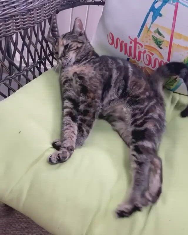 Cute cat so sleepy