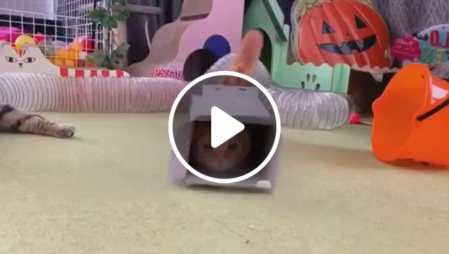 How To Call A Cat - Video & GIFs   funny cute cats, cute animals, cute cats, cats and kittens, puppies and kitties, dogs, cute funny animals, i love cats, cool cats, animals and pets, baby animals