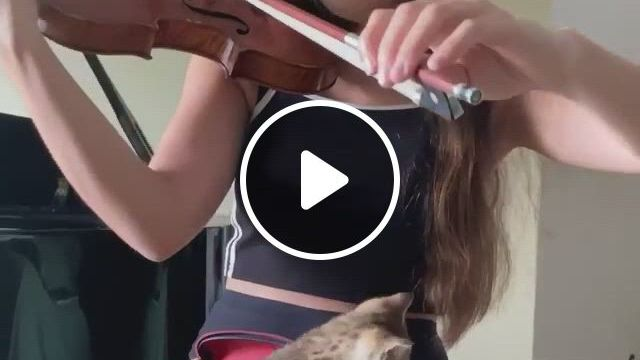 She Has It All; The Beauty, The Talent, The Kind Heart And The Kitten. - Video & GIFs   all about kitties, funny animal videos, funny animals, cute animals, cute cats, funny cats, baby girl blue eyes, cat climber