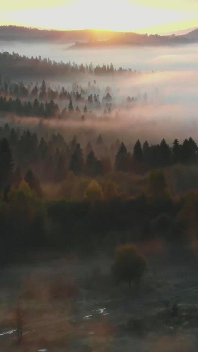 Polska misty forest - Video & GIFs | beautiful places to travel,places to travel,nature,misty forest,northern lights,gifs,woodland forest,naturaleza