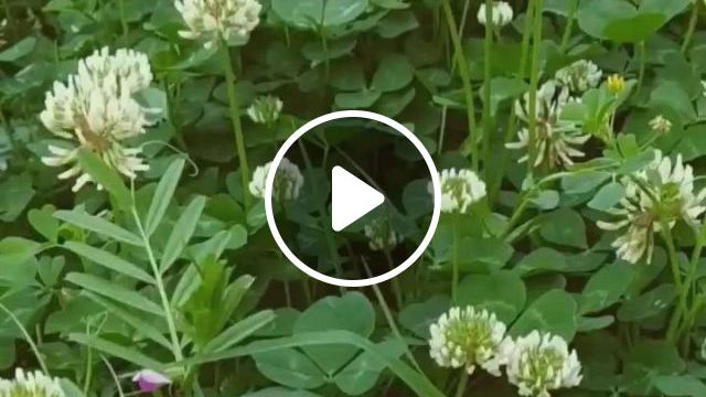 Wild Flowers - Video & GIFs   flowers, wild flowers, plants, pallet, herbs, nature, shed base, naturaleza, wildflowers, palette