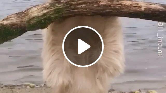 Peekaboo - Video & GIFs | cute little animals, cute animals, funny animals, super cute animals, cute funny animals, baby animals, funny cute, i love dogs, cute dogs, funny dogs, cute puppies