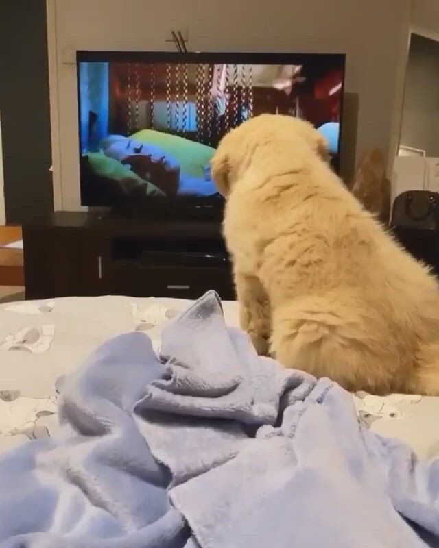 Scary movie - Video & GIFs | puppy dog images,puppy images,cute dogs and puppies,big dogs,doggies,dog illustration,dog memes,scary movies