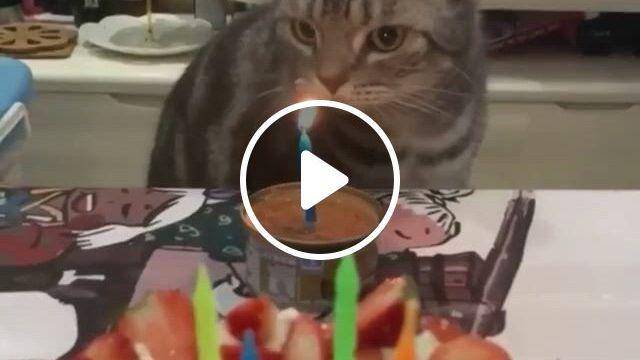 Birthday Kitty - Video & GIFs | happy birthday cat, cat birthday, cute cat gif, cat lover gifts, cat gifts, cat lovers, cute cats, i love cats, kittens cutest, cats and kittens, funny animals