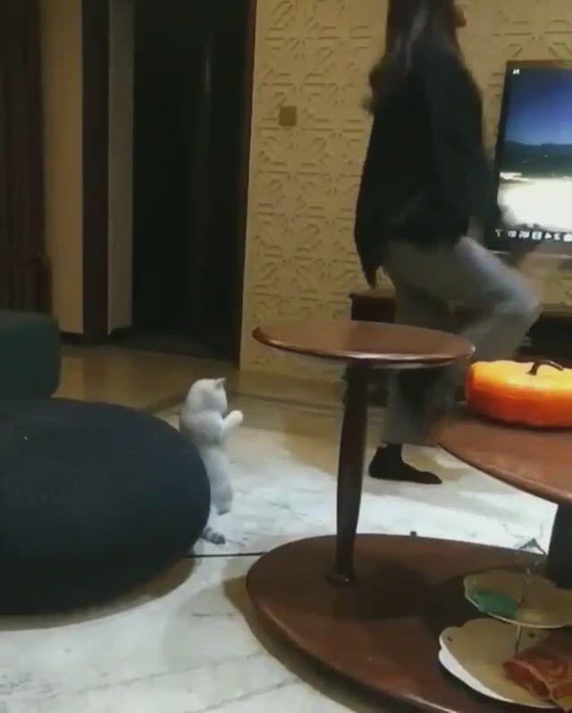 Cute cat dancing
