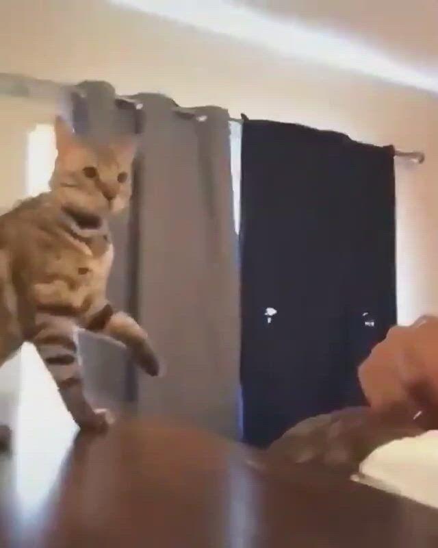 Cute cat scratching - Video & GIFs | cat scratcher,cat scratching post,diy cat scratcher,modern cat scratching post