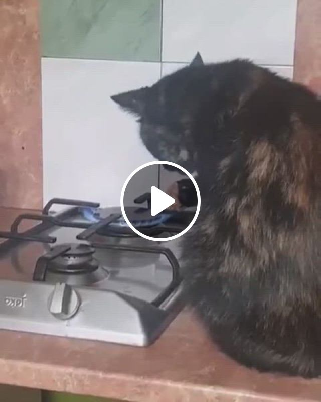 Whaaaat Did She Just Put Her Paw On Fire - Video & GIFs | cute cats and kittens, cute animals, cats and kittens, i love cats, crazy cats, cool cats, animals and pets, funny animals, cute little animals, really funny memes, funny clips