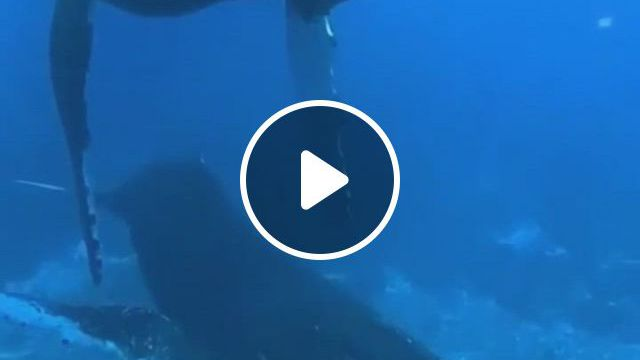 Beautiful Whales - Video & GIFs   ocean animals, scary ocean, marine animals, fierce animals, cute animals, dolphin images, underwater creatures, wale, humpback whale