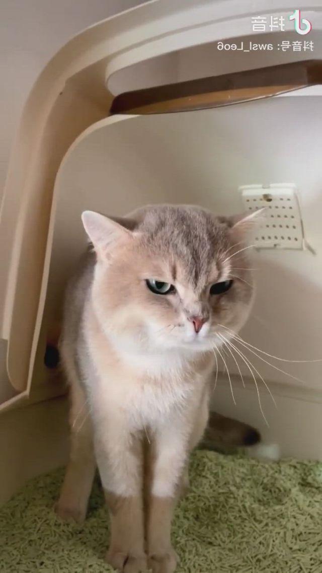 A poor cat in constipation hahahaha