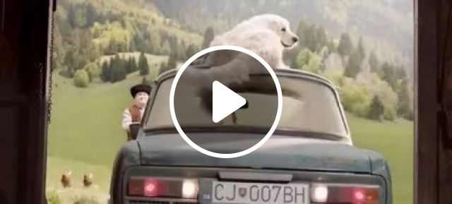 A smart dog and a cute chick help the owner back the car, funny dog, chicken, car, animals