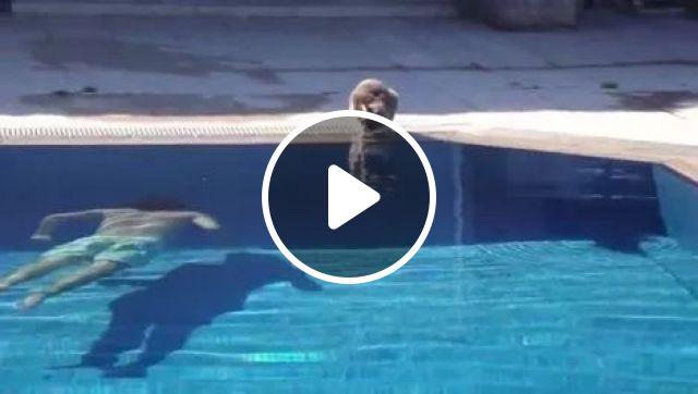 Play a prank on little cat, animals, Cat, Prank, Pool, Swimming, Dive