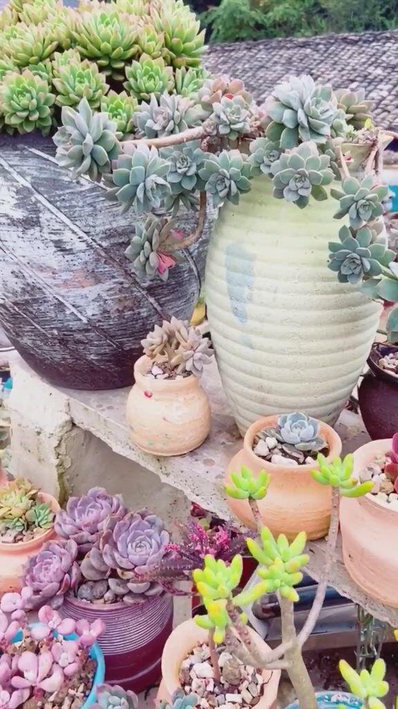 Succulent plant - Video & GIFs   natureza,cactus,flower ,garden route,planting succulents,planter pots,table decorations,flowers,gardens,patio